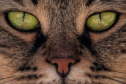 Album sedinta foto pisica elise